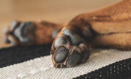 Celui qui possède un chien verra la récompense de ses bonnes actions diminuer chaque jour