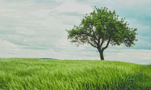 La foi comporte plus de soixante dix branches