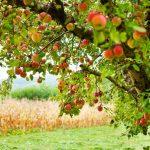 Celui qui plante un arbre, aura une aumône pour tout fruit mangé ou même volé