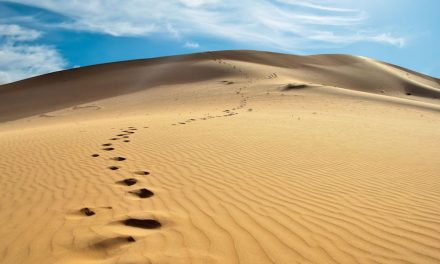 L'exemple de celui qui a suivi le Prophète ﷺ et l'exemple de celui qui ne le suit pas