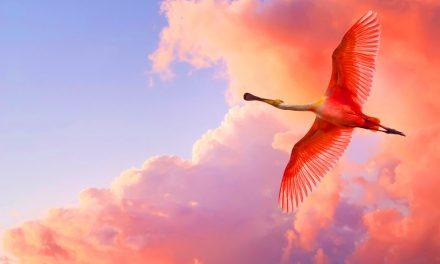Placer sa confiance en Allah comme le fait les oiseaux