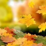 Les paroles qui font tomber les péchés comme les feuilles d'un arbre
