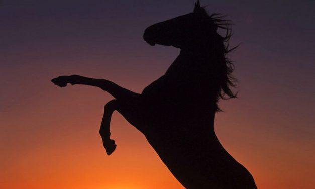L'histoire du cheval et sourate al kahf