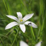Les fourmis forment une communauté qui glorifie Allah