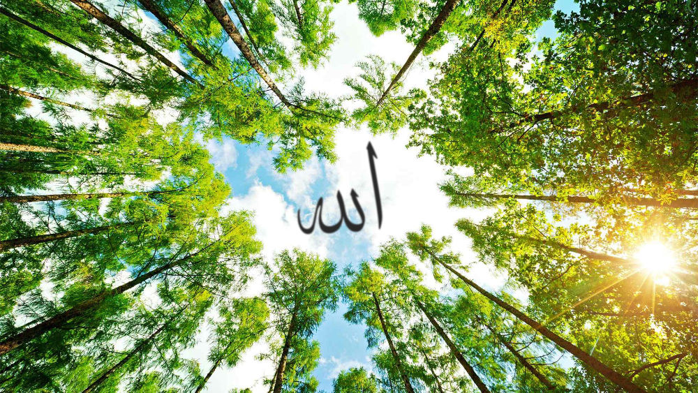 Qui a créé ton Seigneur Allah ?