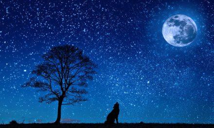 L'histoire du loup, des deux mères et de l'enfant